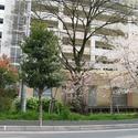 City Court Sone-Higashimachi Daini 2DK