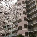 Miyakojima River City 2LDK